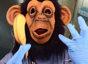 Doctor Bobo, Simian Medical Assistant