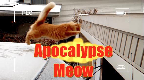 Apocalypse Meow | ZDoggMD