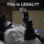 vader medical marijuana | zdoggmd